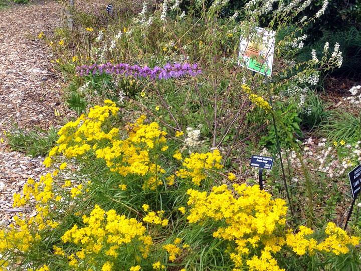 Wildflower garden in bloom