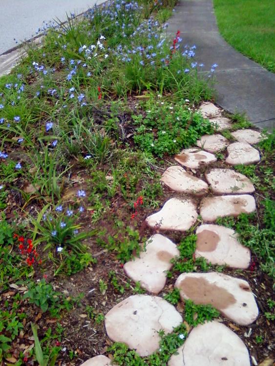 Wildflower home landscape