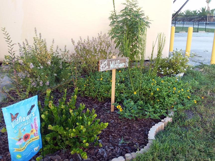 Wildflower garden at Sea Park Elementary